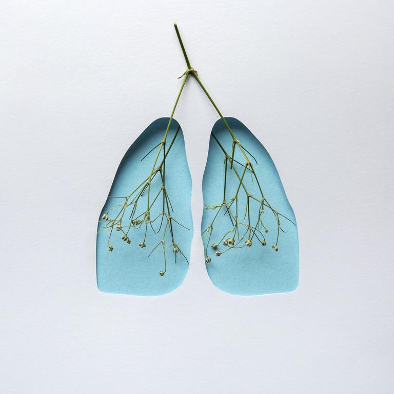 Lungenflügel als Collage aus blauem Papier und einer Blütenrispe