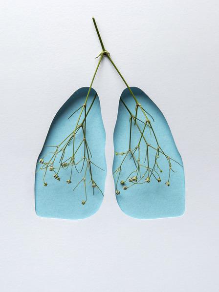 Darstellung von zwei Lungenflügeln