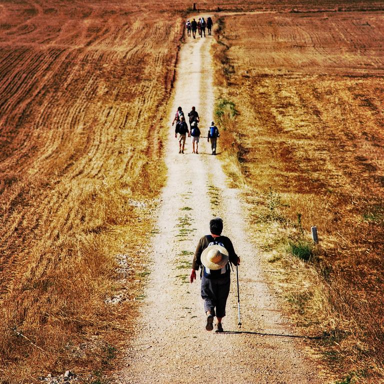 verschiedene kleinere Pilgergruppen wandern auf einem Feldweg