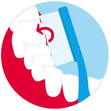 Zahnbürste reibt über die Innenseiten der Backenzähne