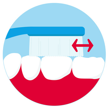 Zahnbürste reibt über die Kauflächen der Backenzähne