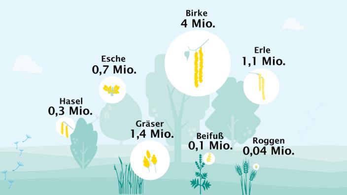 Bäume und Pflanzen, deren Pollen am häufigsten eine allergische Reaktion auslösen