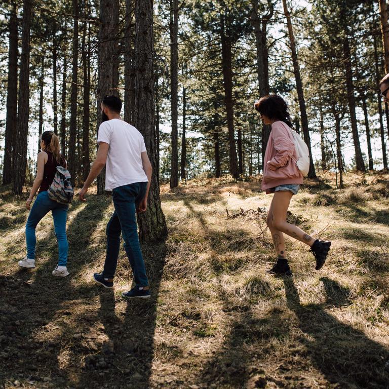 Vier Menschen gehen durch einen Wald spazieren.