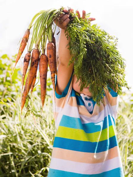 kleiner Junge hält ein frisch geerntetes Bündel Karotten hoch