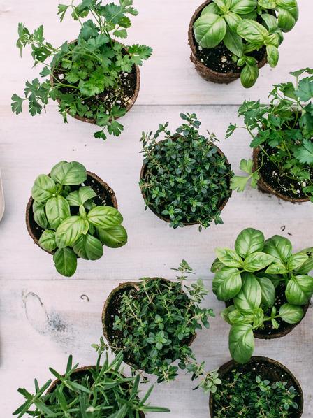 Pflanztöpfe mit verschiedenen Kräutern