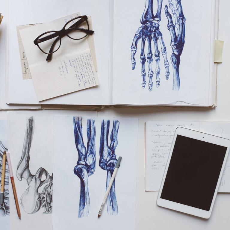 Mehrere gezeichnete Anatomiebilder auf einem Tisch, daneben liegt ein Tablet