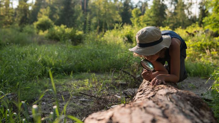 Kind sucht mit einer Lupe nach Insekten an einem Baumstamm.