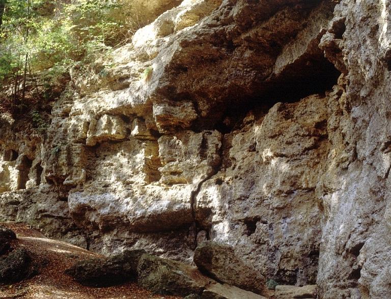 Felswand im Buchenhain in Baierbrunn