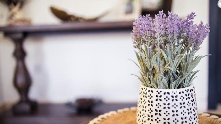 Lavendel Topfpflanze