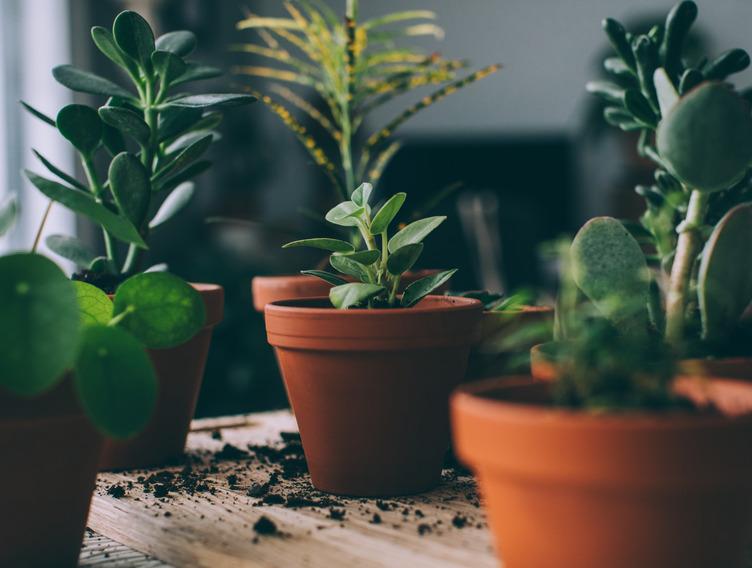 Blumentöpfe mit Zimmerpflanzen